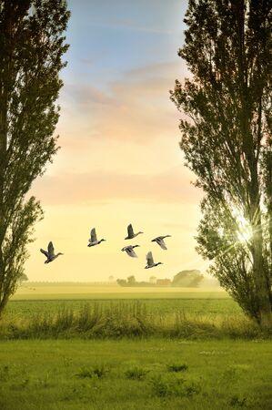 poplars: Classic country scene with fields, poplars sunset Stock Photo