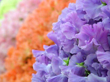 Flowers Standard-Bild