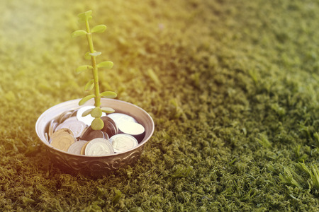 plant growing out of algeria coins in silver bowl ,money saving for vacation