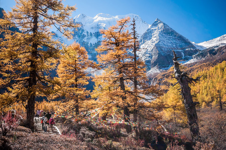 Daocheng, Sichuan , China - October 23,2008 : Chinese tourist visting autumn forest in Yading national level reserve in Daocheng, Sichuan Province, China.
