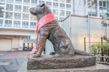 Tokyo, Japan - November 20, 2015: View of Bronze statue of Hachiko at Shibuya Station. A dog is remembered for his remarkable loyalty to his owner which continued for many years, Tokyo, Japan. Zdjęcie Seryjne - 58004485