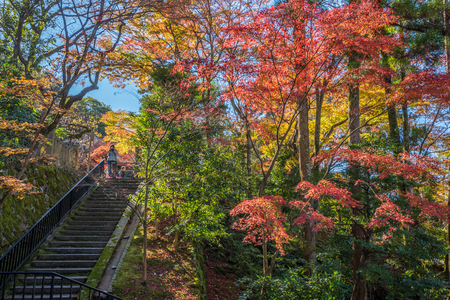 momiji: Kyoto, Japan - November 27, 2015 : Unidentified people visit Eikando temple in autumn.Eikando temple is one of the most popular tourist at Kyoto in high season ( Momiji), Kyoto, Japan.