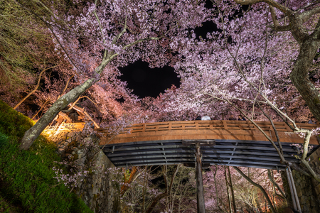 Light up of Cherry blossoms with wooden bridge at Takato Castle Site Park, Nagano, Japan
