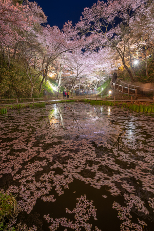 Light up of Cherry blossoms with reflection pond at Takato Castle Site Park, Nagano, Japan Фото со стока - 121807947