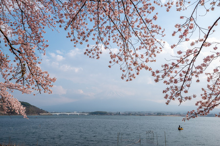 Lake kawaguchiko and Mount fuji with cherry blossom in Yamanashi near Tokyo, Japan Фото со стока