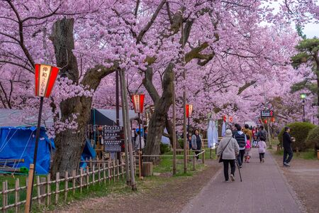 Nagano, Japan - April 21, 2019 : The people visiting light up of Cherry blossoms at Takato Castle Site Park in Nagano, Japan.