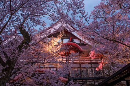 Nagano, Japan - April 21, 2019 : The  light up of Cherry blossoms at Takato Castle Site Park in Nagano, Japan. Zdjęcie Seryjne - 135907238