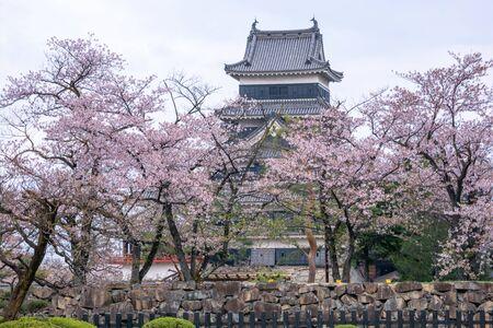 Matsumoto Castle During Cherry Blossom , Nagano Prefecture, Japan Zdjęcie Seryjne - 135929975