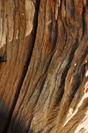 ant on trunk photo