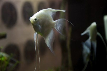 fish in aquarium photo