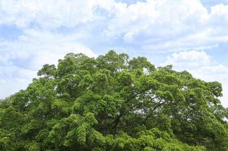 La parte superior de árbol grande con un hermoso cielo brillante