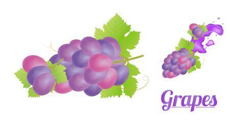 red grape: grapes Illustration