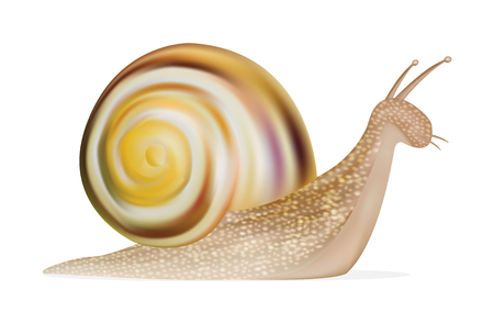 slowness: snail on a white background Illustration
