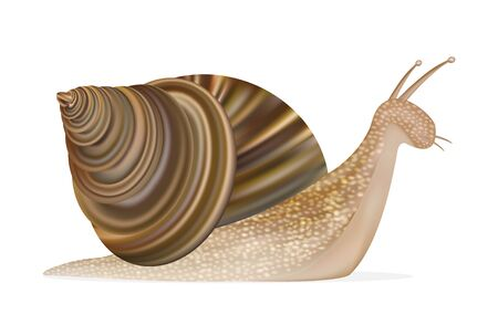 snail on a white background Illustration