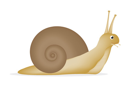 slow food: snail on a white background Stock Photo