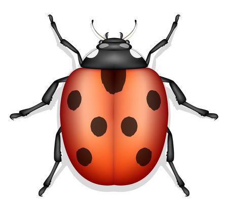 ladybug: ladybug insect vector Illustration