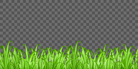 Real green grass on transparent background vector vector illustration.