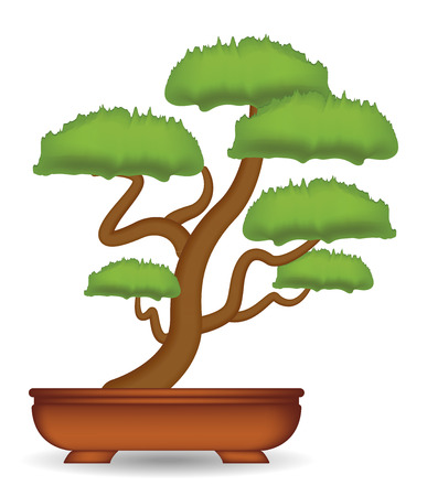 bonsai tree on a white background vector