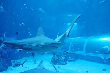 close up of big shark in an aquarium