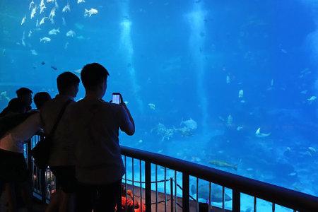 SINGAPORE - 14 October 2018 : Unidentified visitors at S.E.A Aquarium, Singapore. It is largest aquarium in Asia featuring 800 species of marine life in a variety of habitats. Editorial