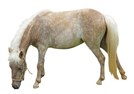 horse isolated on white background Stok Fotoğraf