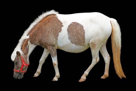 horse isolated on black background