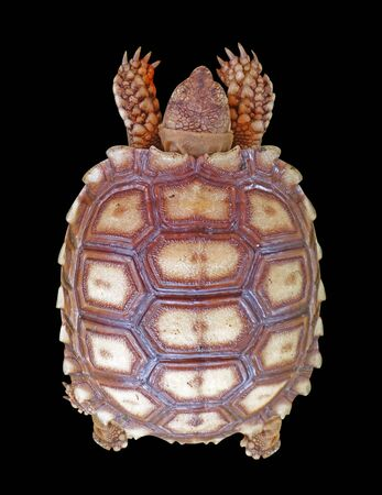 turtle isolated on a black background