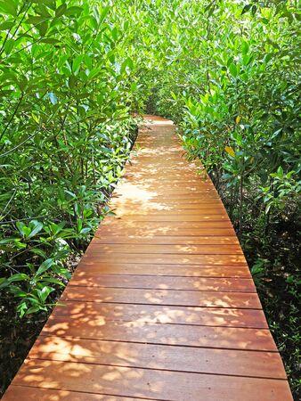 a wooden walkpath through Mangrove Forest Located In Chanthaburi Province,Thailand Stok Fotoğraf