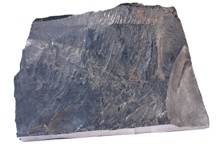 shale: Cannel coal is a type of oil shale. Width of sample 12 cm.