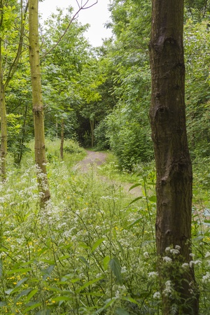 country path through a woodland setting Stock Photo