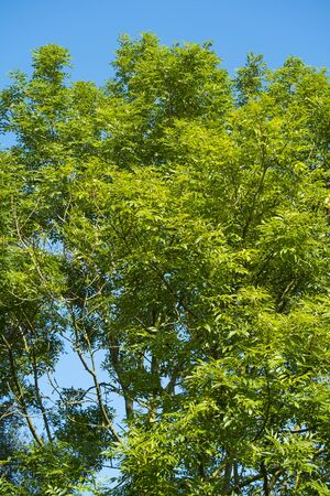 tree with green leaves against a blue sky