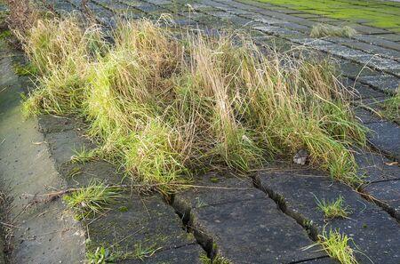 grass growing wild through cracks between concrete blocks