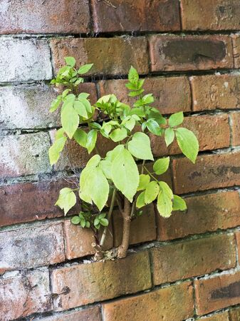 green plant growing between the bricks of a wall