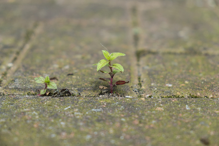 Small plant growing between bricks in paved yard