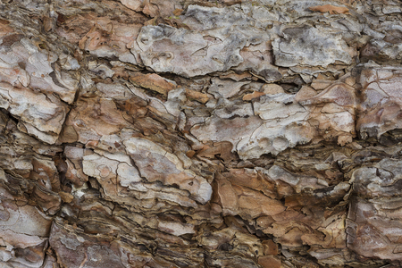 Close up of tree bark showing texture Stock Photo