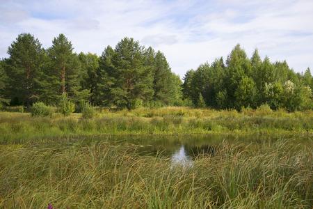 kostroma: In the oxbow river Vetluga in late summer. Kostroma Region, Russia