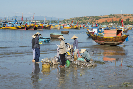 december 25: MUI NE, VIETNAM - DECEMBER 25, 2015: Sorting and accounting of catch of vietnamese women in the Fishing harbour of Mui Ne