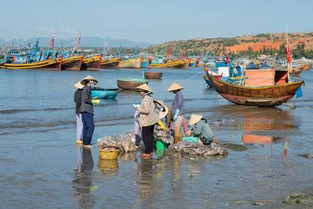 dismantle: MUI NE, VIETNAM - DECEMBER 25, 2015: Sorting and accounting of catch of vietnamese women in the Fishing harbour of Mui Ne