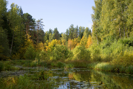indian creek: September in the backwaters of the river Meza. Kostroma region, Russia