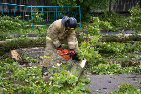 collapsed: ST. PETERSBURG, RUSSIA - JUNE 16, 2016: Emergency workers sawing collapsed after a thunderstorm a tree Editorial