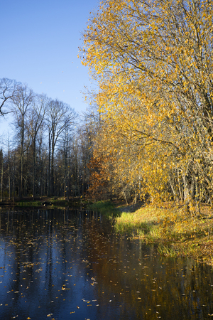 The leaves on the old pond. Petrovskoye, Pushkinskie Gory, Russia