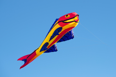animal kite: The kite in the form of fish soars in the clear blue sky