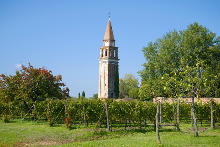 Vineyard near the old bell tower on the Mazzorbo island on a sunny afternoon. Venice italy Stock Photo