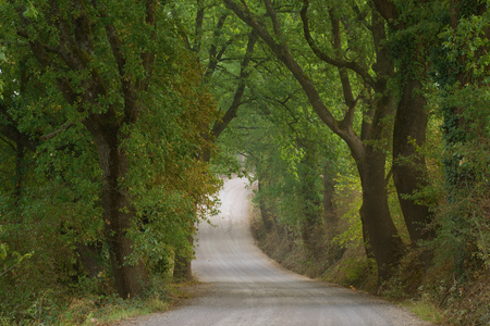 Rural country road surrounded by trees. Tuscany, Italy