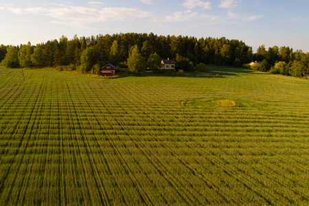 July evening over the field (aerial survey). Southern Finland Banco de Imagens