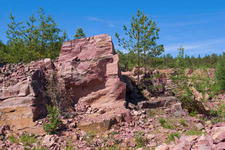 A fragment of a rock of raspberry quartzite in an old quarry on a sunny June day. Kvartsitniy, Karelia