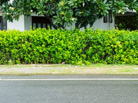 shrubbery: Road and shrubbery tree on the wayside