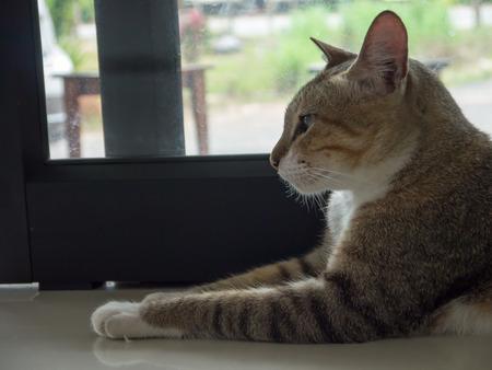 resting: cat resting