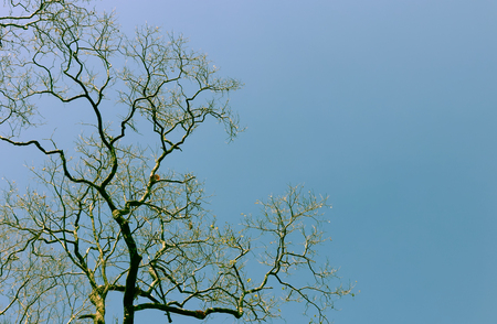 Autumn season change  then falling down, remaining only tentacle trees with clear blue sky