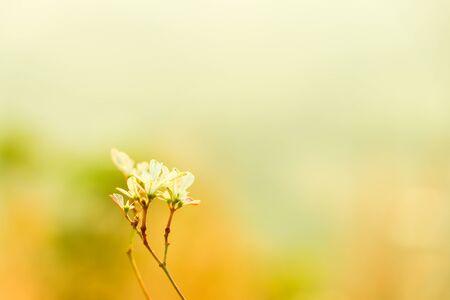 fresh elite Leaf for spring background Stock Photo